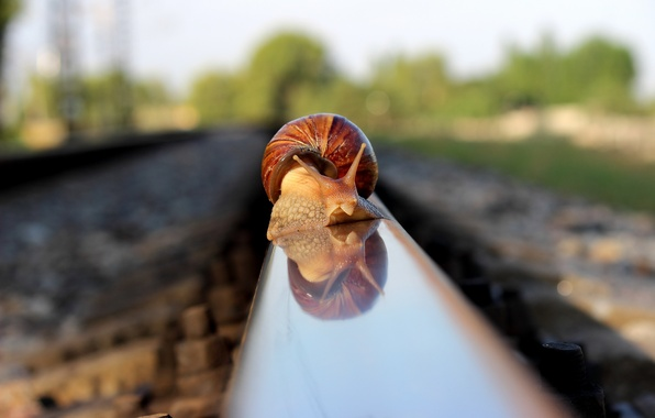 Picture macro, nature, snail