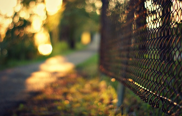 Picture grass, trees, mesh, the fence, the evening, fence, blur, metal, bokeh