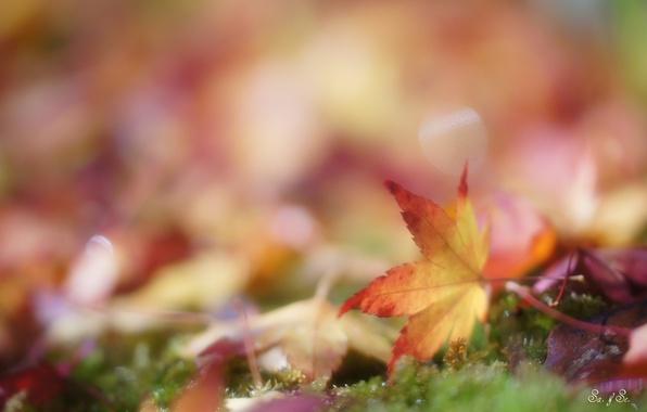 Picture autumn, grass, leaves, glare, yellow, fallen