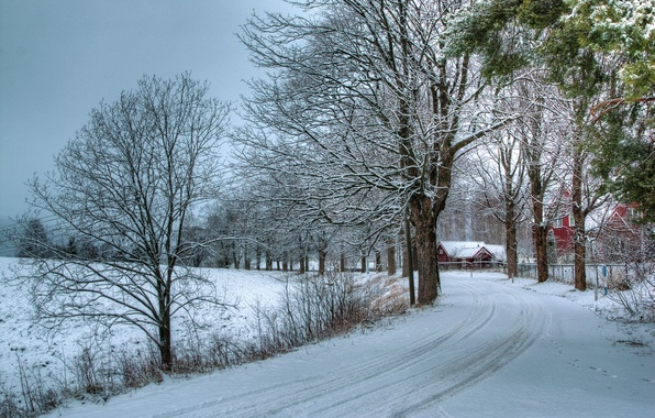 Picture winter, road, snow, trees, nature, photo