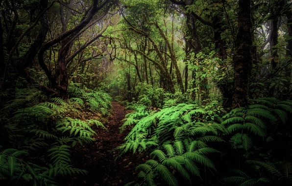 Photo wallpaper leaves, forest, thickets, trees, fern, path