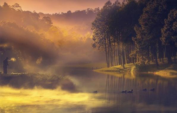 Picture fog, river, duck, fisherman, morning, haze