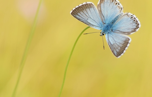Photo wallpaper yellow, background, butterfly, blue, grass