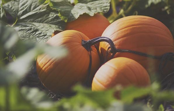 Picture orange, pumpkin, a lot