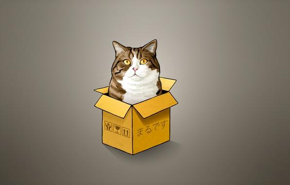 Picture cat, cat, box, minimalism, cat, Peeps