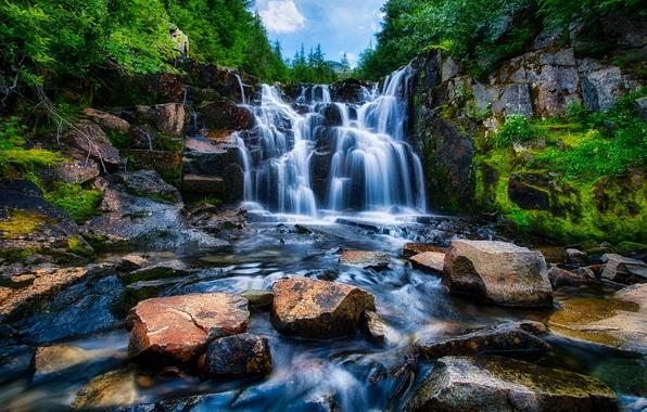 Picture forest, trees, river, stones, waterfall, USA, Washington, Mount Rainier