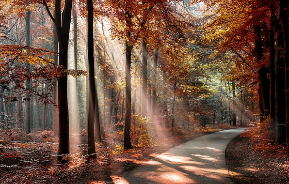 Picture autumn, forest, leaves, the sun, trees, Park, the way, shadows