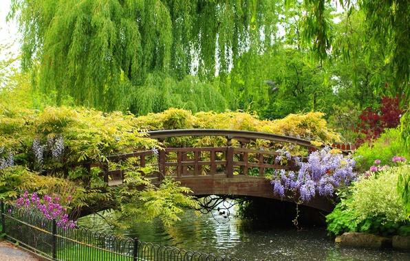 Picture trees, flowers, Park, beauty, plants, fence, river, the bridge, bridge, beautiful, IVA, Spring garden, weeping