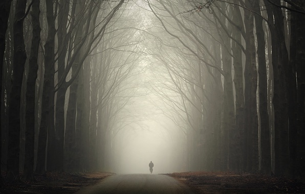 Picture road, autumn, forest, fog, people