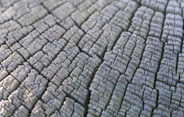 Picture macro, tree, stump, texture, texture, wood, hemp, stump