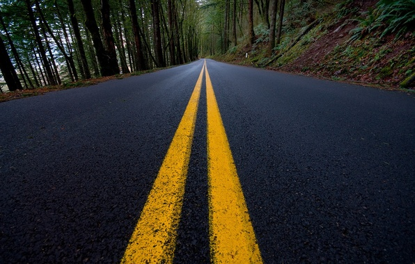 Picture road, forest, markup, 156, lines