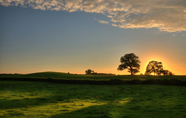 Picture greens, the sky, grass, leaves, the sun, trees, landscape, sunset, nature, background, tree, widescreen, Wallpaper, …