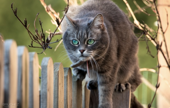Picture cat, cat, face, branches, the fence