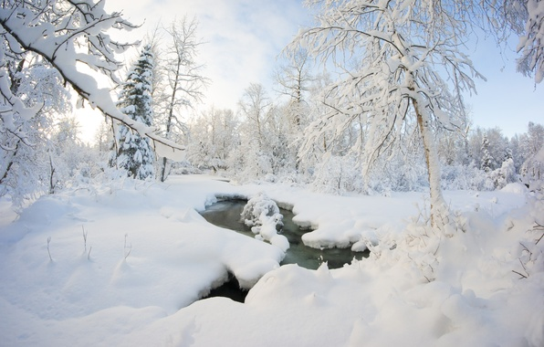 Picture winter, forest, snow, trees, stream, the snow