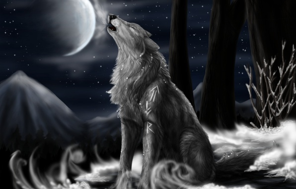 Picture night, the moon, stars, Wolf, North Howl