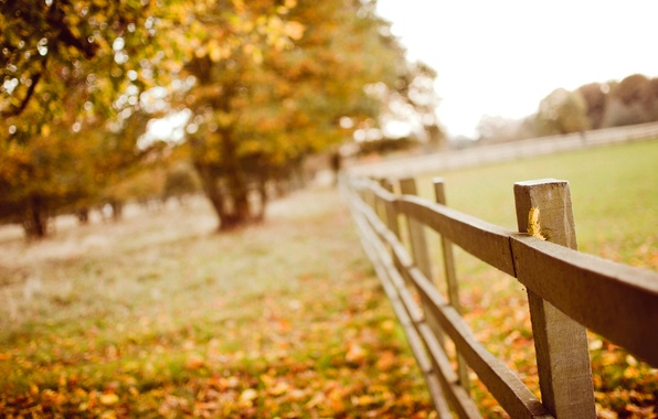 Picture autumn, leaves, macro, trees, nature, the fence, yellow, blur, wooden