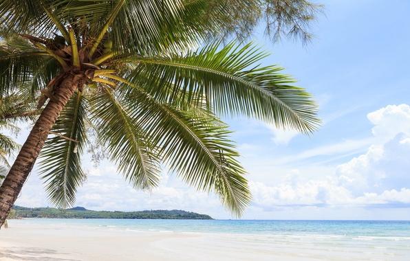 Picture sea, leaves, Palma, tree