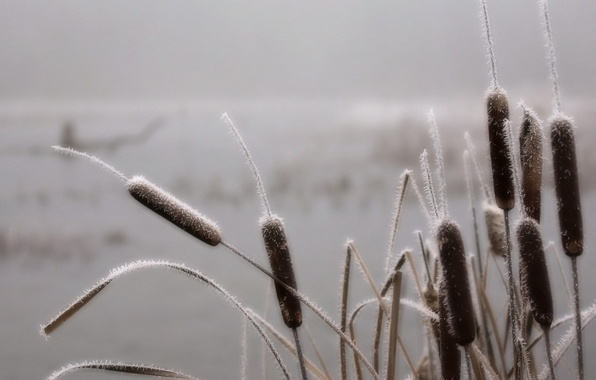 Picture frost, fog, swamp, Grass