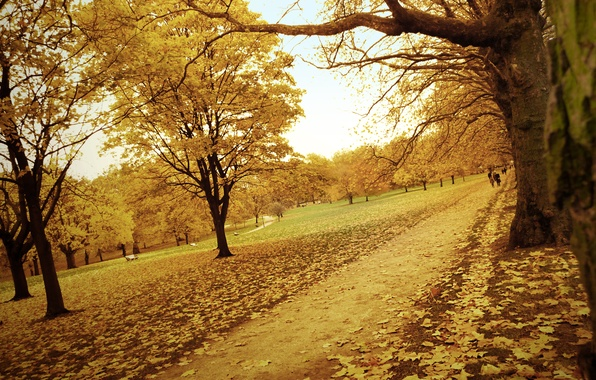 Picture road, autumn, forest, leaves, trees, yellow, Park, path