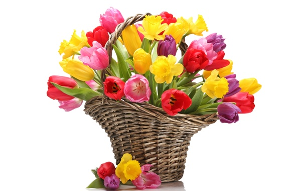 Picture flowers, basket, bouquet, yellow, tulips, red, daffodils