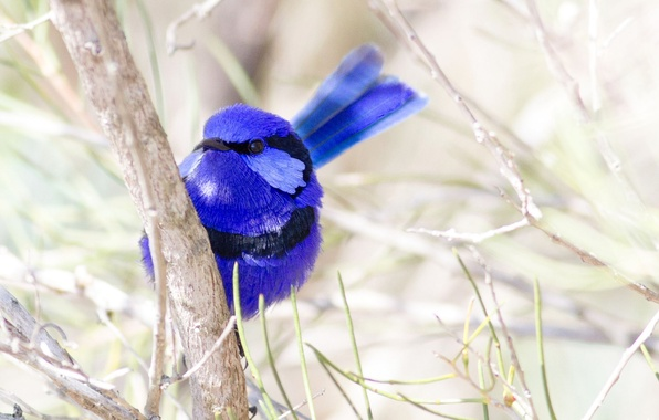 Picture nature, bird, color, branch, feathers