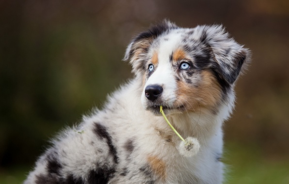 Picture look, each, dandelion, dog
