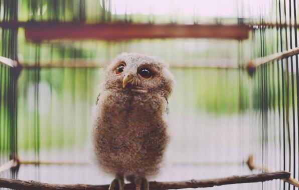 Picture owl, bird, looks, owlet