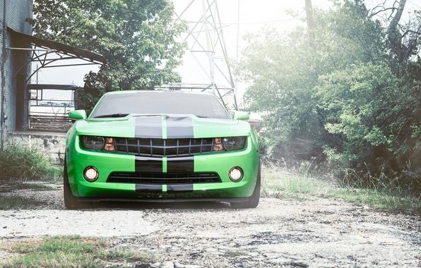 Picture strip, black, green, green, Chevrolet, camaro, chevrolet, the front, Camaro