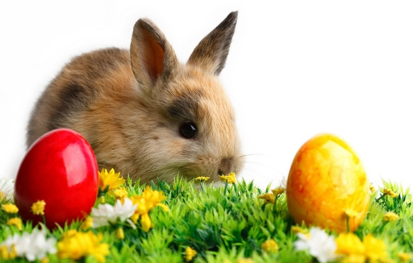Picture white, grass, flowers, background, animal, colored, eggs, rabbit, Easter, ears