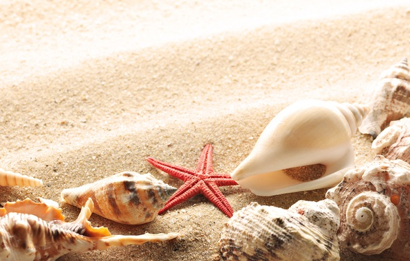 Photo wallpaper summer, the sun, shore, shell, sand