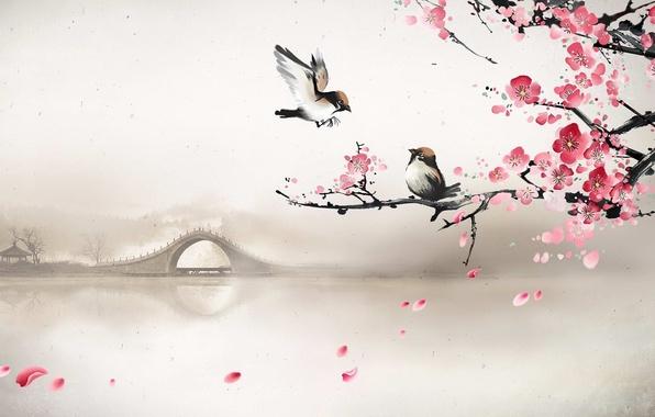 Picture bridge, fog, river, spring, morning, Sakura, art, birds, cherry blossoms