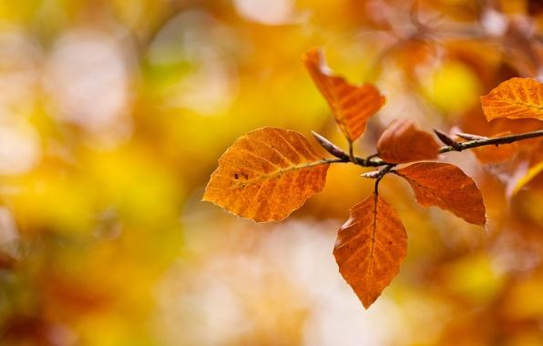 Picture autumn, macro, nature, branch, yellow, Leaves, orange, bokeh
