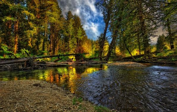 Picture autumn, forest, landscape, nature, river, forest, river, landscape, nature, beautiful, autumn, cool, nice
