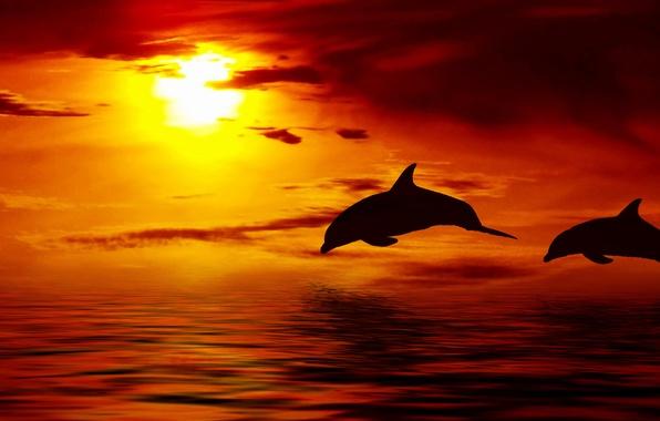 Picture the sky, the sun, clouds, sunset, Dolphin, the ocean, Beautiful, sky, ocean, Sun, sunset, clouds, …