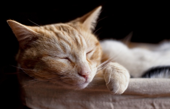 Picture cat, pets, sleeping