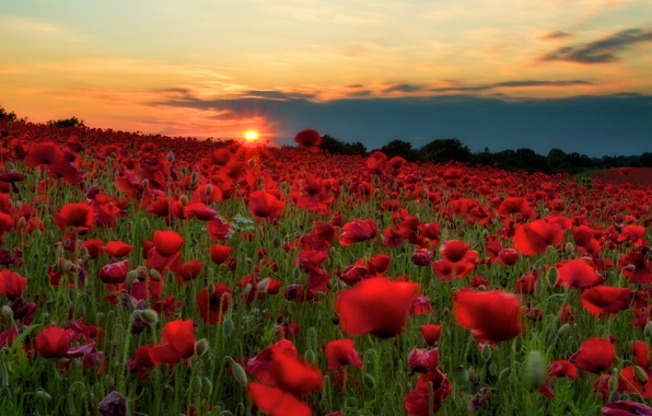 Picture field, the sky, the sun, clouds, sunset, flowers, hills, Maki, meadow