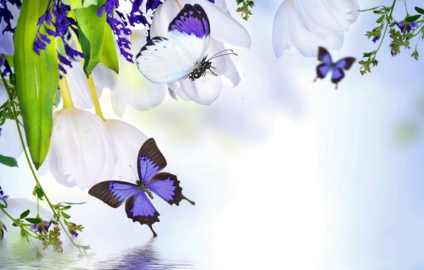 Picture water, butterfly, reflection, spring, tulips, flowering, water, blossom, flowers, tulips, spring, purple, reflection, butterflies