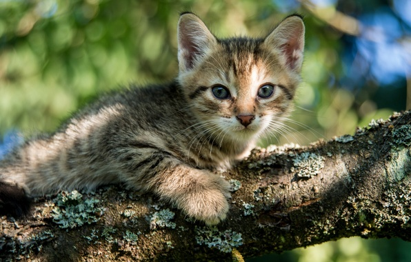 Picture eyes, look, tree, kitty