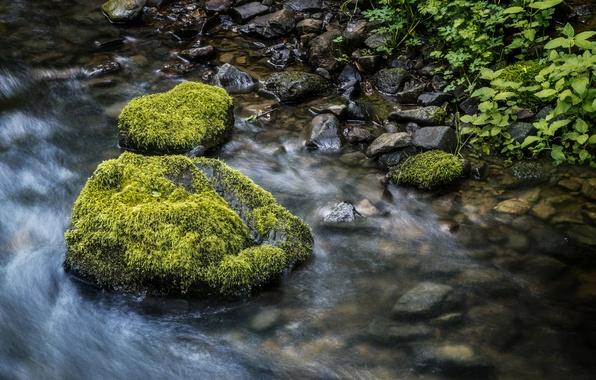 Picture grass, stream, stones, moss