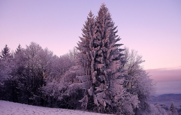 Picture cold, winter, the sky, snow, trees, nature, tree, hills, spruce, ate, frost