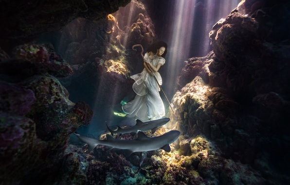 Picture girl, shark, sharks, cowgirl, underwater photography