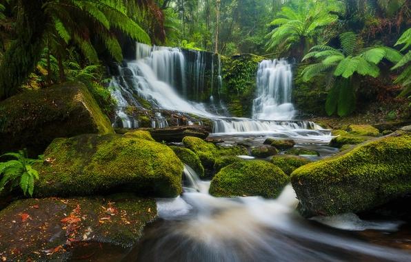 Picture forest, river, stones, waterfall, Australia, cascade, Australia, Tasmania, Tasmania, Mount Field National Park, National Park …
