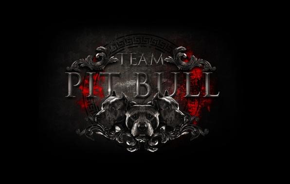 Picture logo, logo, team, logo, fight club, mma, mixed martial arts, mixed martial arts, team pit …