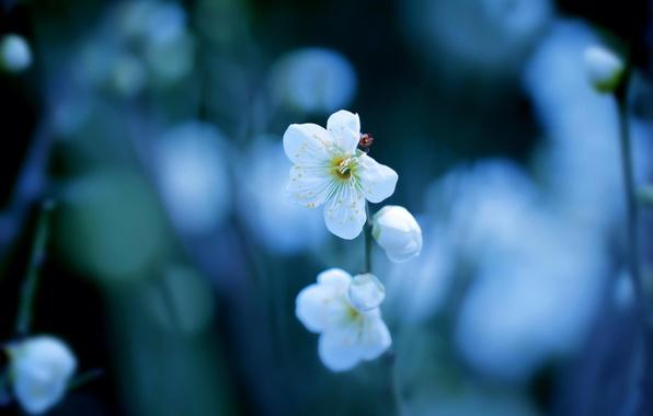 Picture flowers, branch, spring, white, flowering, bokeh, drain
