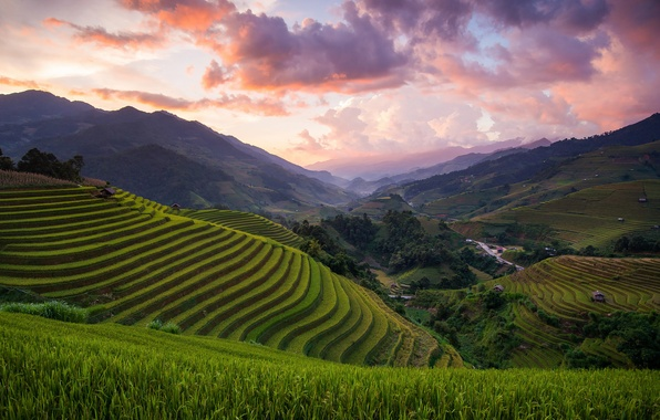 Picture hills, field, Asia, Vietnam, rice, Mu Cang Chai District
