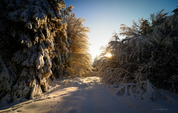 Picture winter, forest, the sun, rays, light, snow, glare, Germany, February, Hesse