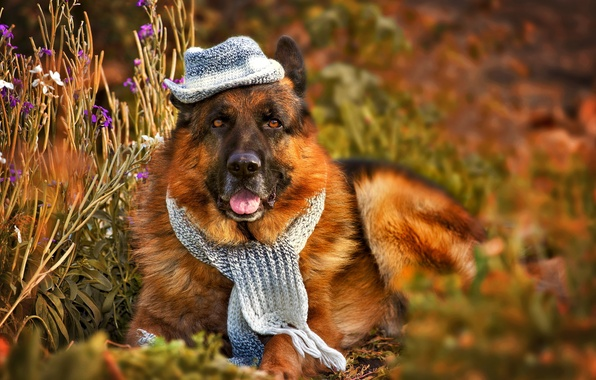 Picture look, each, dog, hat