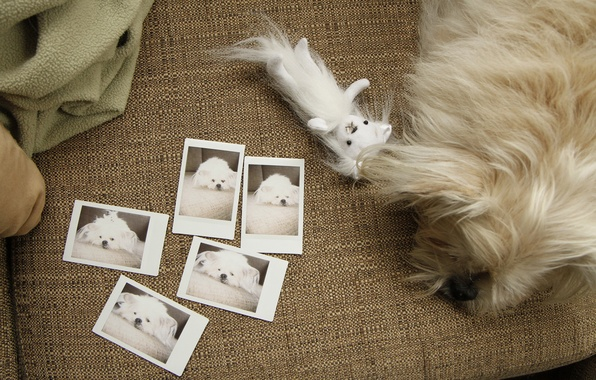 Picture sofa, toy, dog, photos, white, the view from the top, lying