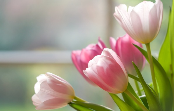 Picture bouquet, tulips, buds