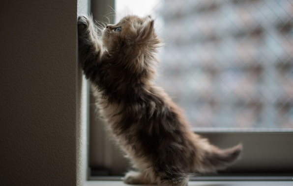 Picture cat, kitty, wall, window, angle, Daisy, Ben Torode
